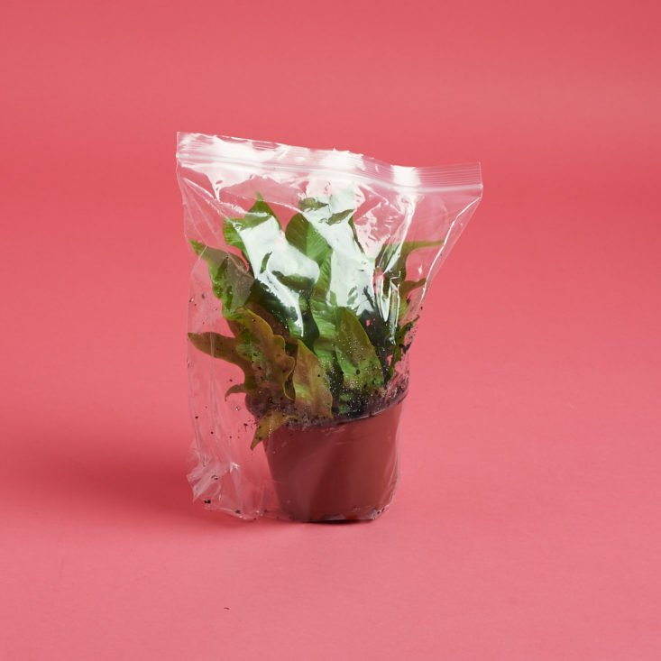 the plant in a plastic bag